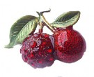 Cherries Pin DZ-162